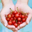 Woman Holding Cherries — Stock Photo