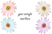 Flowery template — Stock Photo