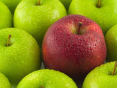 Background of green apples with a single Red — Photo