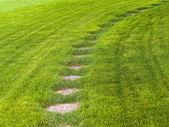 Stone path through a green grassy lawn backgroun — Stock Photo
