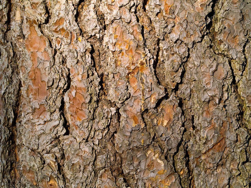 evergreen tree bark background - photo #1