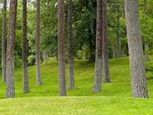 Grasbewachsenen park und bäume — Stockfoto