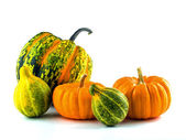 Mini Pumpkins Isolated on a White Background — Stock Photo