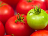 A Background of Red Ripe Tomatoes and One Green Tomato — Stock Photo