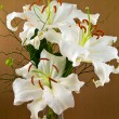 Casablanca White Lilies Closeup Showing Flower Details — Stock Photo