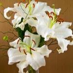 Casablanca White Lilies Closeup Showing Flower Details — Stock Photo