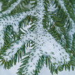Snow Covered Pine Tree Branches Close Up — Stock Photo