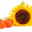 Big sunflower and fresh tomatoes — Stock Photo #2765706