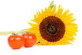 Big sunflower and fresh tomatoes — Stock Photo