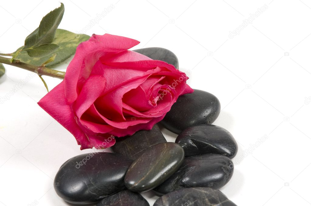 Pink rose with spa stones isolated on white — Stock Photo #2898753