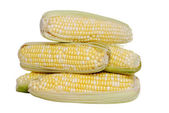 Isolated pile of sweet corn — Stock Photo