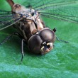 Dragon fly on green leaf — Stock Photo
