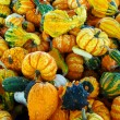 Gourd Background — Stock Photo