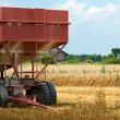 Closeup farm trailer in wheat field — Stock Photo