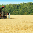 Oil pump in a wheat field - Stock Photo
