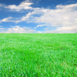 Grass with blue sky and clouds - Stock Photo