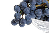 Closeup concord grapes — Stock Photo