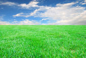 Grass with blue sky and clouds — Stock Photo