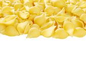 Isolated shell pasta — Stock Photo