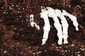 Skeleton hand in dirt — Stockfoto