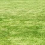Fresh cut lawn — Stock Photo