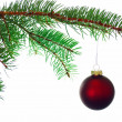 Red Christmas ball on a branch — Stock Photo