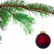 Stock Photo: Red Christmas ball on a branch