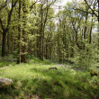 Woodland in spring — Stockfoto