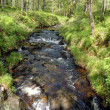 Stream in Forest Park wider — Stock Photo