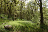 Woodland in spring — Stock Photo