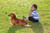 Chinese child with a dog in the park watching — Stock Photo