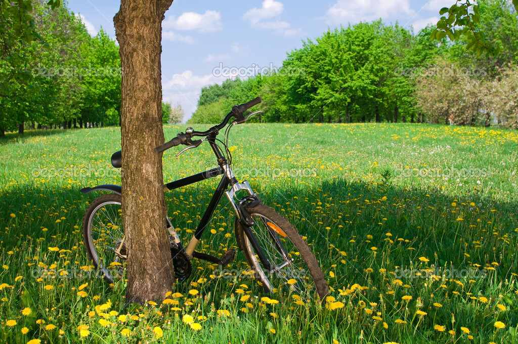 Outdoor shoot of bicycle in the green field  Stock Photo #3158027