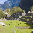 Llamas at Machu Picchu - Stock Photo