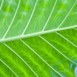 Stock Photo: Green leaf detail