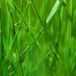 Stock Photo: Green