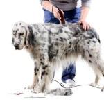 hund grooming — Stockfoto