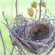 Empty nest — Stockfoto