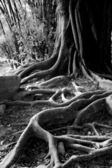 Roots — Stock Photo