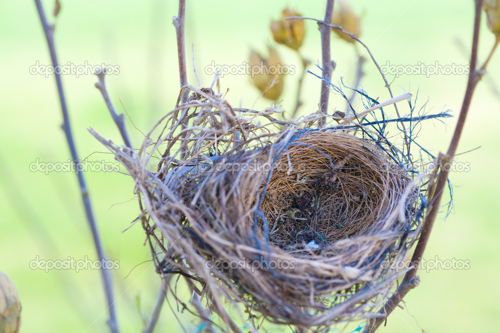 Closeup image of an empty bird nest — Stock Photo #2828404