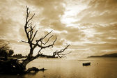 Dead tree and the sea — Stock Photo