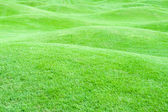 Green pastures 1 — Stock Photo