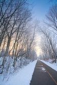 Winter alley — Stockfoto