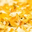 Stock Photo: Golden leaves