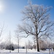 Stock Photo: Winter morning