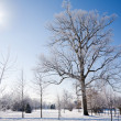 Winter morning — Stock Photo