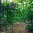 Stock Photo: Footpath in the woods