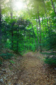 Footpath in the woods — Stock Photo