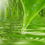 Green freshness — Stock Photo #3543969