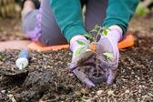 Jardinagem — Foto Stock