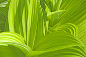 Green plant — Stock Photo